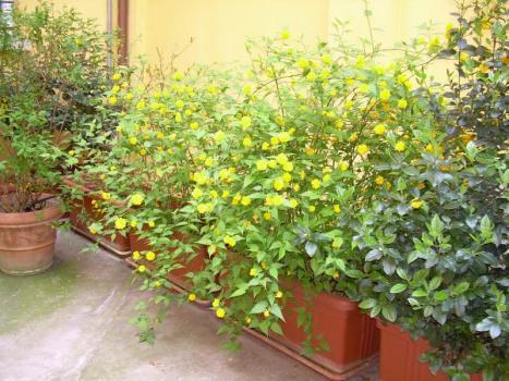 Verde nel cortile